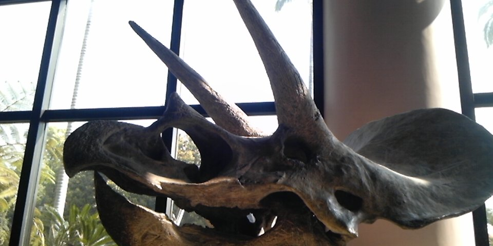 恐竜の頭骨