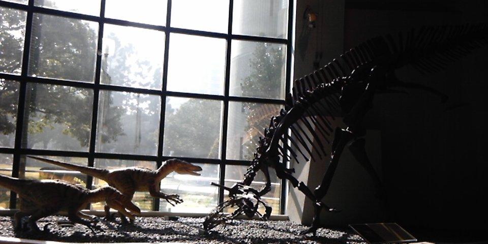 恐竜の化石とレプリカ